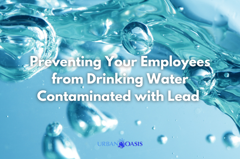 Preventing Your Employees from Drinking Water Contaminated with Lead